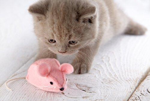 Gattino con topo di peluche rosa