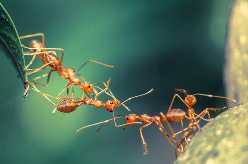 delle formiche scalano una foglia