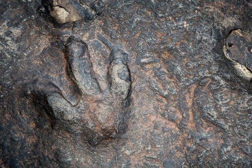 Dinosaur Valley State Park impronta dinosauro