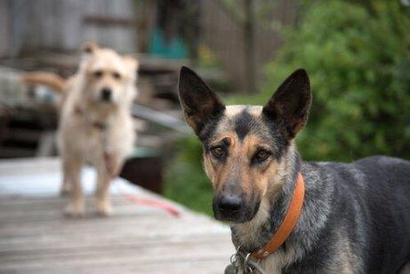 due cani a passeggio in un parco verde