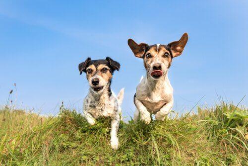 due cani nel prato