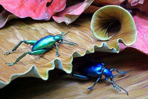 6 specie di coleotteri affascinanti