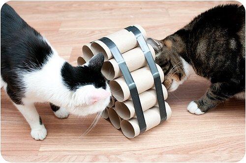 due gatti giocano con un muro fatto di rotoli