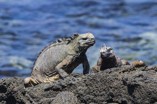 Cosa sono gli animali endemici?