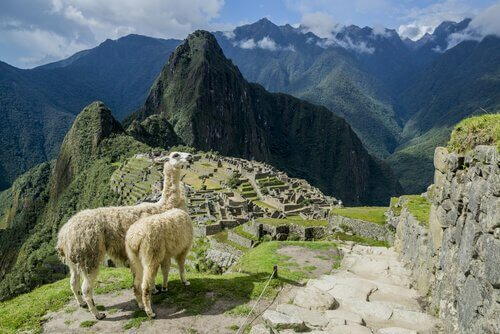 Vigogna nelle Ande