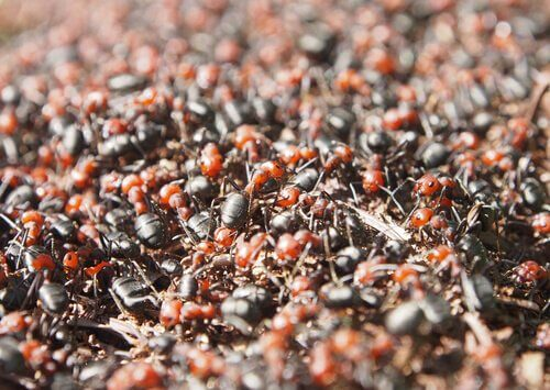Esercito di termiti furia bianca