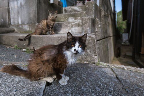 gatti che vivono su isola giapponese