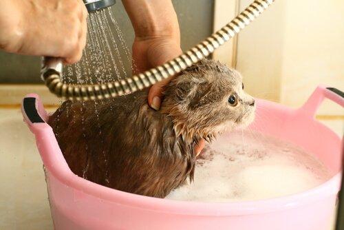 Gattino spaventato durante la doccia in un catino