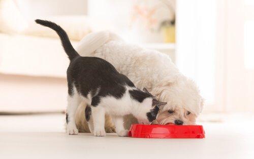 gatto e cane mangiano dalla stessa ciotola rossa