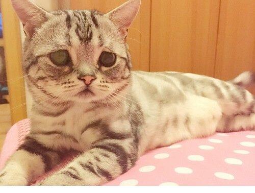 gatto triste sul letto