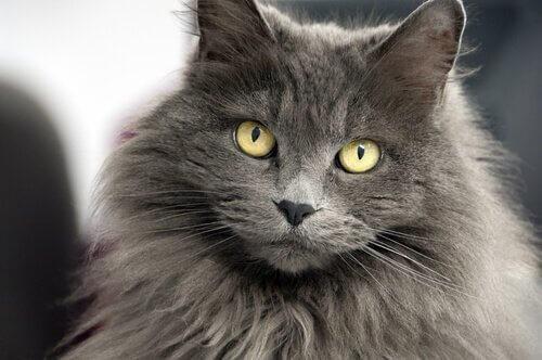 12 nomi per gatti a pelo lungo