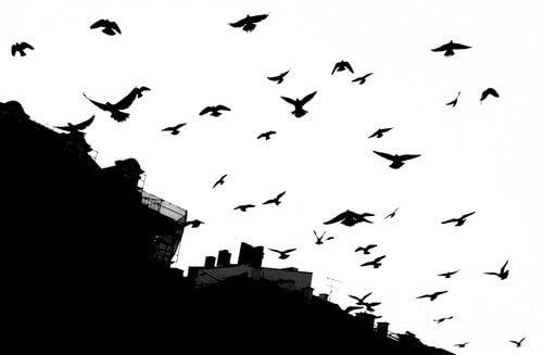 Gli uccelli di Alfred Hitchcock