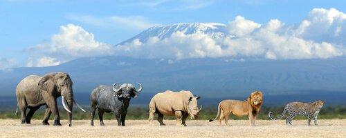 I cinque grandi dell'Africa assieme in una foto