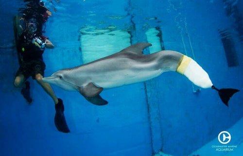 La storia di Winter, il delfino senza coda