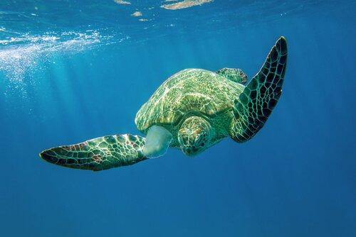 il nuoto di una tartaruga marina