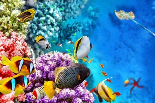 La fauna della Grande barriera corallina