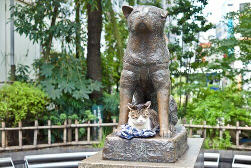 4 cani che seguirono le orme di Hachiko