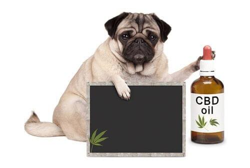 Medicina alternativa per animali domestici