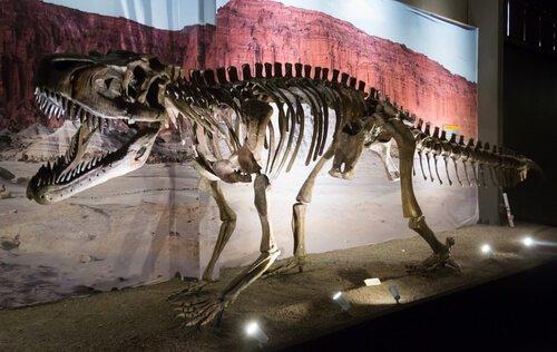 Museo paleontologico Egidio Feruglio