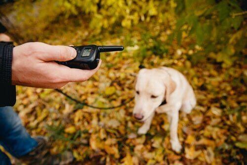 padrone con waltie talkie davanti al suo cane in un bosco
