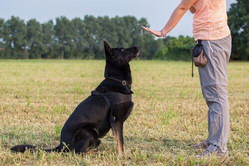 Padrone fa il segno di stare fermo al suo cane pastore nero