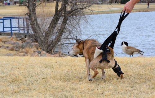 La dieta corretta per un cane con insufficienza renale