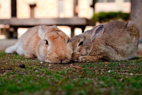 Come eliminare i parassiti dei conigli?