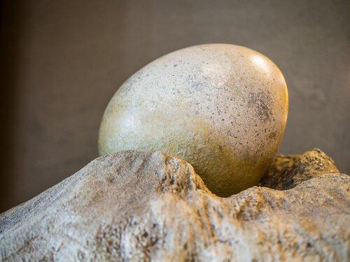 Uovo di dinosauro Indroda Park