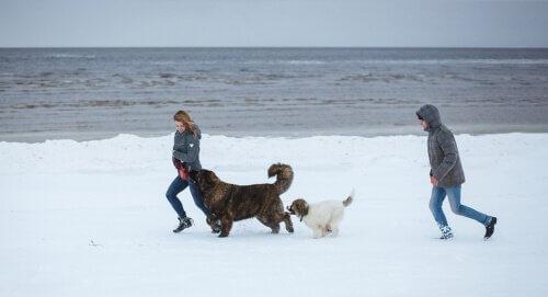 coppia corre nella neve con due cani