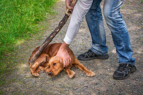 persona picchia con bastone un cagnolino