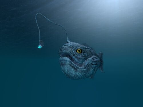 Gli animali che vivono nelle profondità marine
