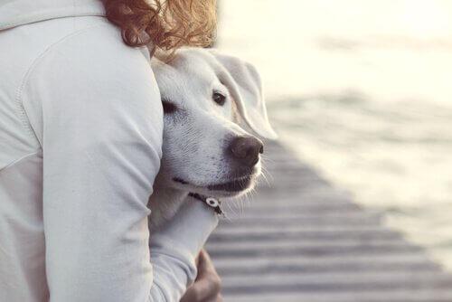 Ragazza abbraccia un cane bianco spaventato