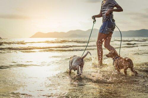ragazza corre sul bagnasciuga con due cani al guinzaglio