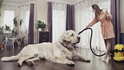 ragazza passa l'aspirapolvere attorno al suo cane