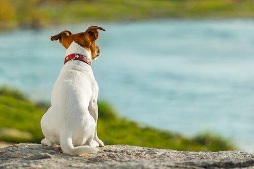 Scopriamo insieme i tipi di coda nei cani