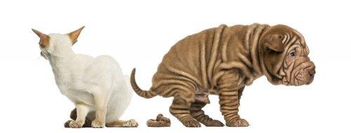 Come trattare la stitichezza negli animali?
