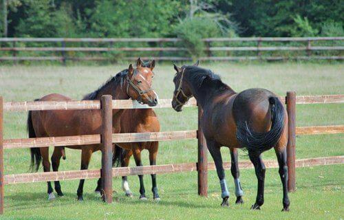 tre cavalli in un allevamento con una staccionata