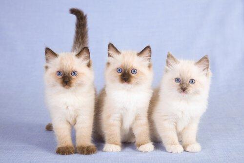 tre cuccioli bianchi in piedi su sfondo celeste