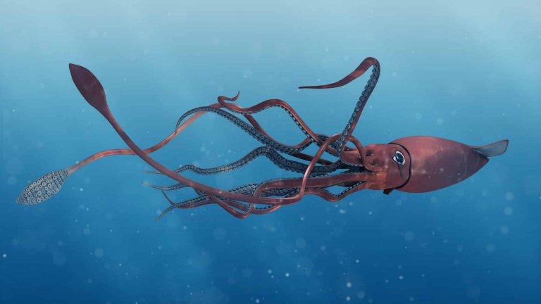 Calamaro gigante: mito o realtà?