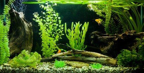 Acquario tropicale con pesci e piante