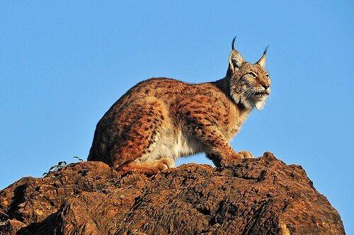 Alla scoperta della fauna della penisola iberica