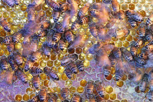 Un alveare con decine di api al lavoro