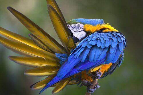 Autodeplumazione: quando il pappagallo si strappa le piume