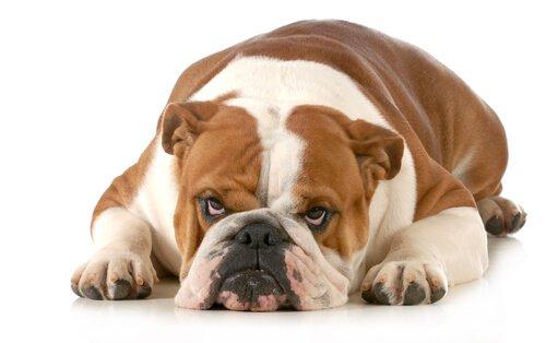 7 cose che i cani non sopportano: quali sono?