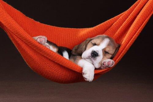 Gli animali domestici possono sognare?