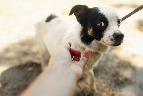 Cosa fare se il cane ha paura degli estranei?
