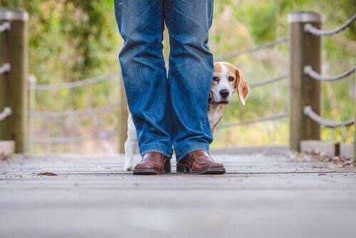 Migliorare il comportamento del cane con l'aiuto del veterinario