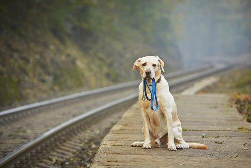 un cane abbandonato accanto a dei binari