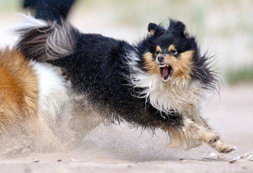5 consigli per gestire un cane aggressivo