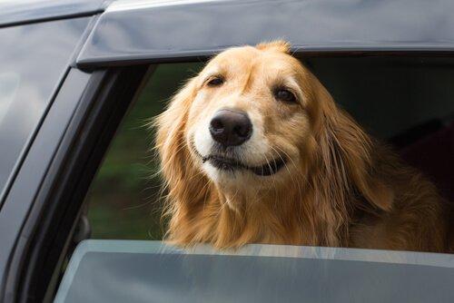 un cane con la testa fuori dal finestrino dell'auto
